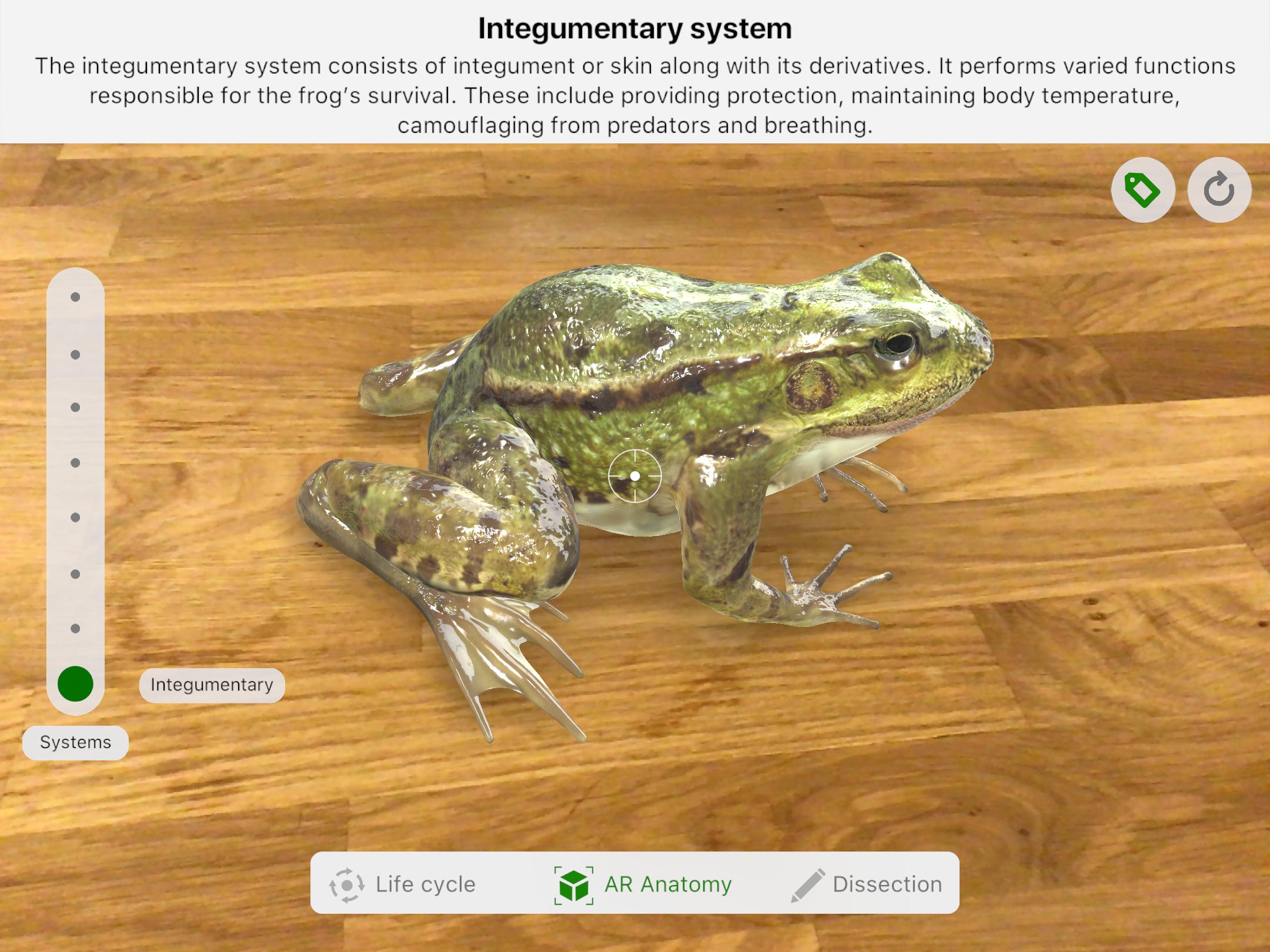 Froggi4